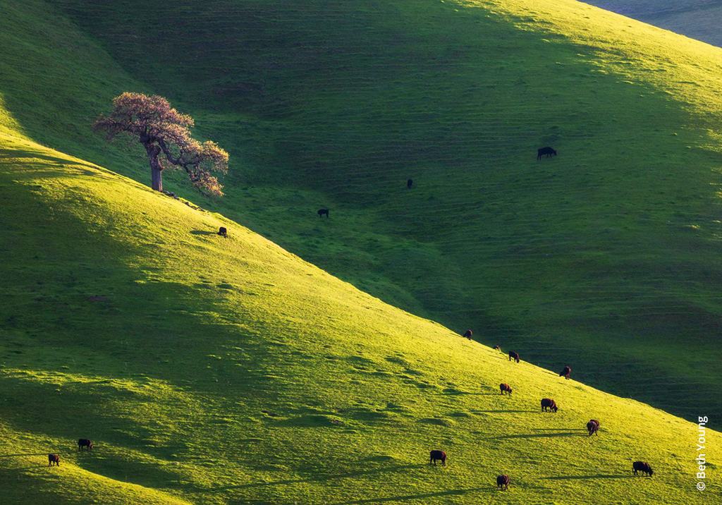 """Today's Photo Of The Day is """"Windows Desktop 2019"""" by Beth Young. Location: Mount Diablo State Park, California."""