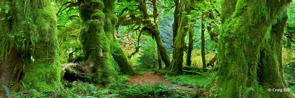 "Today's Photo Of The Day is ""Hall of Mosses"" by Craig Bill. Location: Hoh Rain Forest, Olympic National Park, Washington."