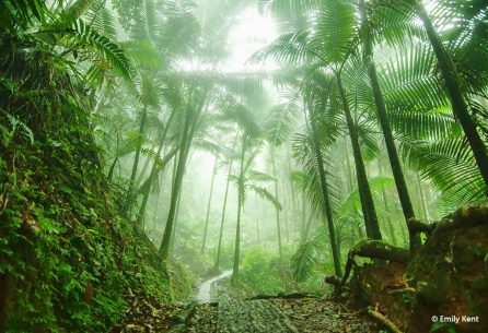 "Today's Photo Of The Day is ""El Yunque National Rain Forest"" by Emily Kent. Location: Puerto Rico."