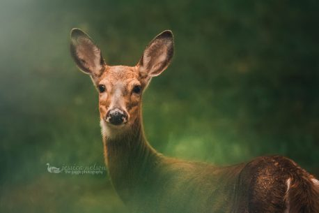 "Today's Photo Of The Day is ""Deer Hiding in the Bushes"" by Jessica Nelson. Location: Maryland."