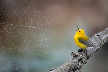 "Today's Photo Of The Day is ""Singing to the Web"" by Stan Bysshe. Location: Alexandria, Virginia."
