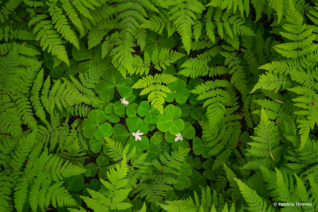 "Congratulations to Patricia Thomas for winning the recent The Green Scene photography assignment with the image, ""The Forest Floor."""