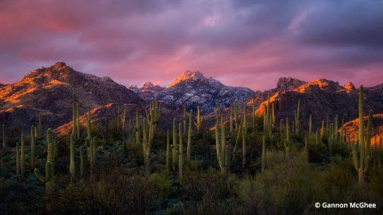 Sabino Canyon in Arizona at sunset