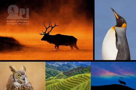 OPI Photo Workshops And Tours