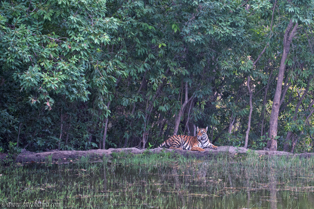 Experience India. Encounter Its Wildlife.