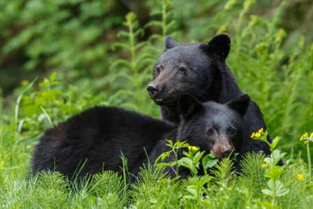 don't feed wildlife like black bears