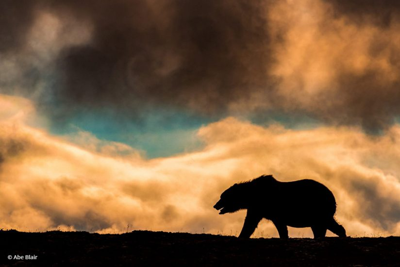 "Today's Photo Of The Day is ""The Man"" by Abe Blair. Location: Katmai National Park, Alaska."