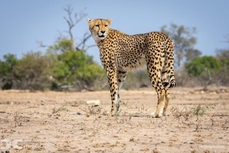"Today's Photo Of The Day is ""Built for Speed"" by Douglas Croft. Location: Mala Mala Game Reserve, South Africa."