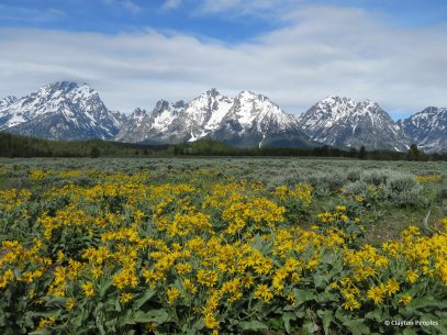 "Today's Photo Of The Day is ""Teton Majesty"" by Clayton Peoples. Location: Grand Teton National Park, Wyoming."