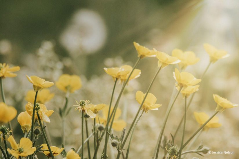 "Today's Photo Of The Day is ""Buttercups in Light"" by Jessica Nelson. Location: Maryland."