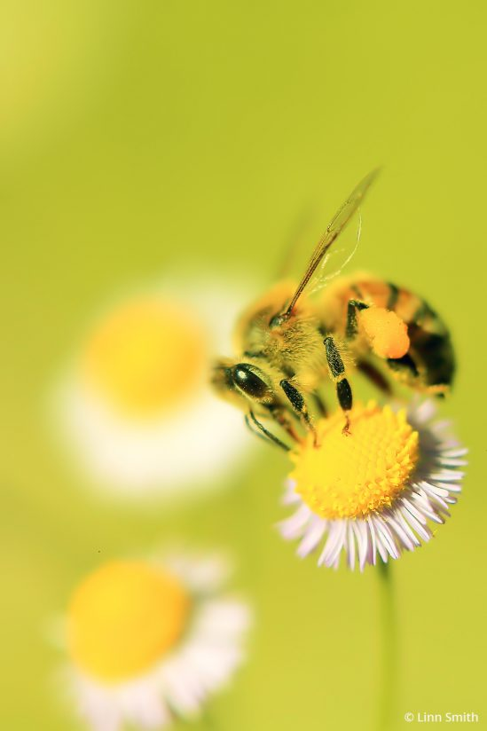 """Today's Photo Of The Day is """"Bee Value"""" by Linn Smith. Location: Oviedo, Florida."""