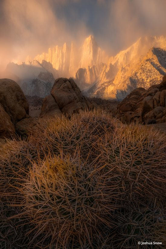 "Today's Photo Of The Day is ""Prickly"" by Joshua Snow. Location: Lone Pine, California."