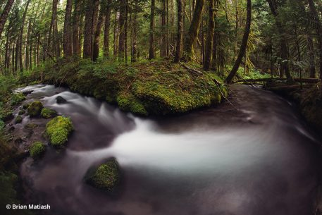 river in forest shot with a fisheye lens