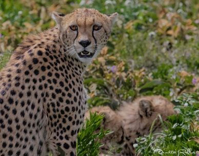 Capture the African Wilderness On Photographic Safaris With Nature And Wildlife Photographer Dimitri Rellos