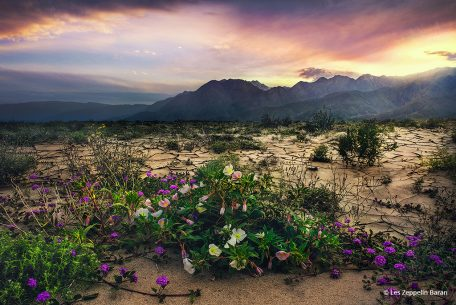 "Today's Photo Of The Day is ""Jewel of the Desert"" by Les Zeppelin Baran. Location: Coyote Canyon, Anza-Borrego Desert State Park, California."