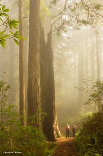 "Today's Photo Of The Day is ""Feeling Small"" by Patricia Thomas. Location: California."