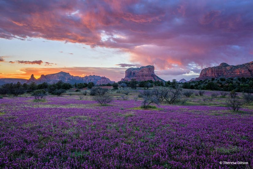 "Today's Photo Of The Day is ""Explosion of Color"" by Theresa Ditson. Location: Arizona."