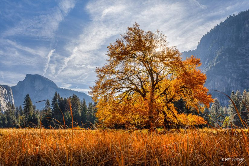"Today's Photo Of The Day is ""Golden Elm in Yosemite Valley"" by Jeff Sullivan. Location: Yosemite National Park, California."