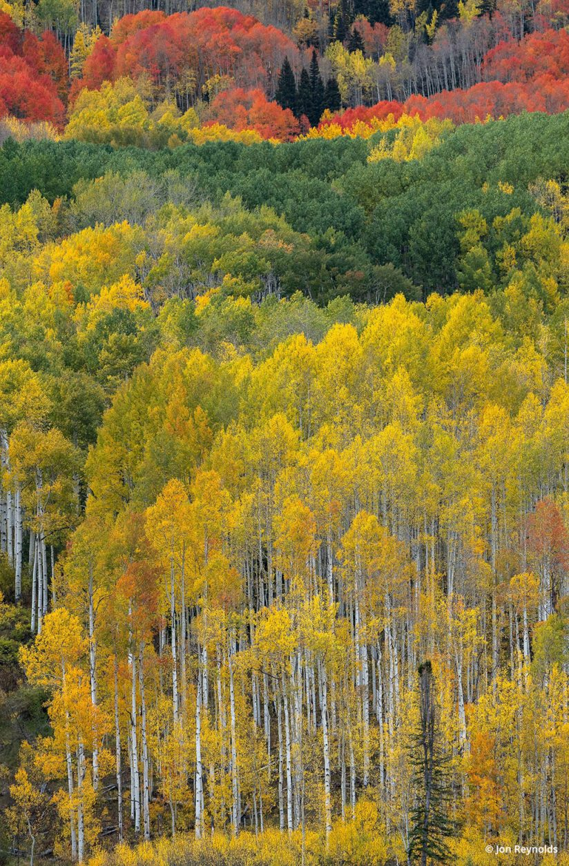 """Today's Photo Of The Day is """"The Way Nature Paints"""" by Jon Reynolds. Location: Kebler Pass, Crested Butte, Colorado."""