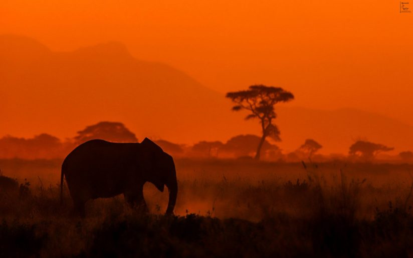 "Today's Photo Of The Day is ""Evening Elephants"" by Heather Nicole."