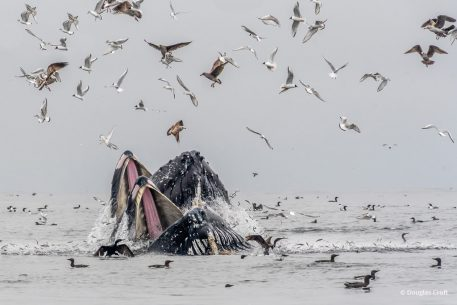 "Today's Photo Of The Day is ""Feeding Frenzy"" by Douglas Croft. Location: Monterey Bay, California."