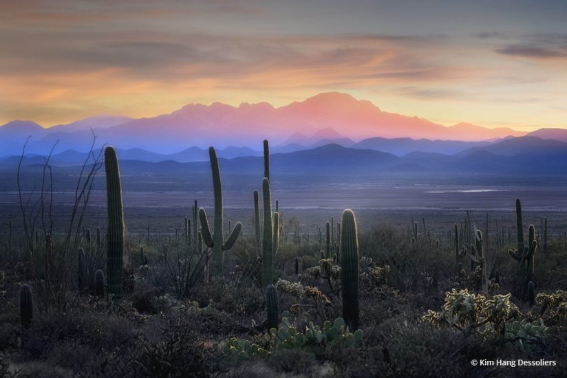 "Today's Photo Of The Day is ""Saguaro Sunset"" by Kim Hang Dessoliers. Location: Arizona."