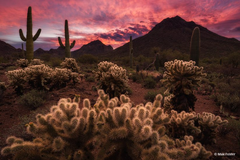 """Today's Photo Of The Day is """"Sonoran Sunrise"""" by Max Foster. Location: Arizona.  """"A beautiful, vivid sunrise in the Arizona desert,"""" describes Foster."""