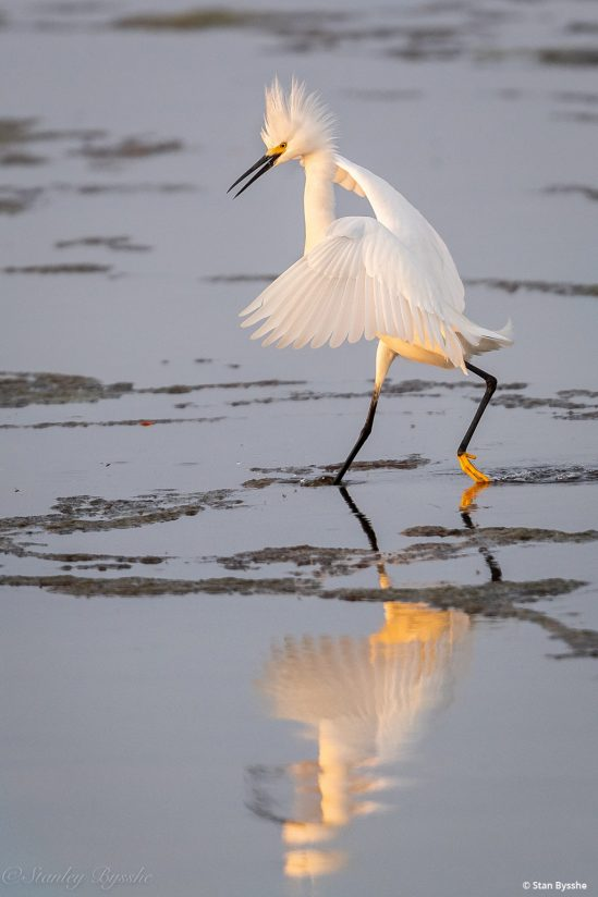"""Today's Photo Of The Day is """"Sun Dance"""" by Stan Bysshe. Location: Chincoteague National Wildlife Refuge, Virginia."""