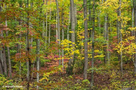 places for fall color photos: Tennessee