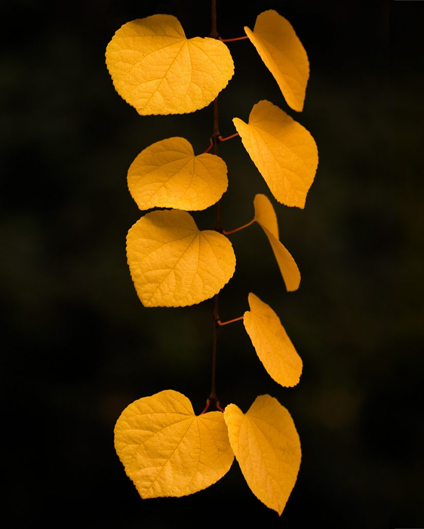 """Today's Photo Of The Day is """"Katsura"""" by Bob Faucher."""
