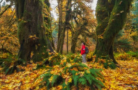 """Today's Photo Of The Day is """"Hyperbola"""" by Gary Fua. Location: Hoh Rainforest, Olympic National Park, Washington."""