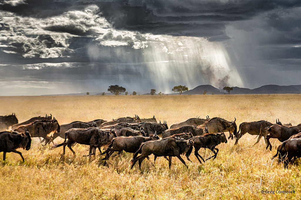 "Today's Photo Of The Day is ""Approaching Storm In the Serengeti"" by Greg Comstock."