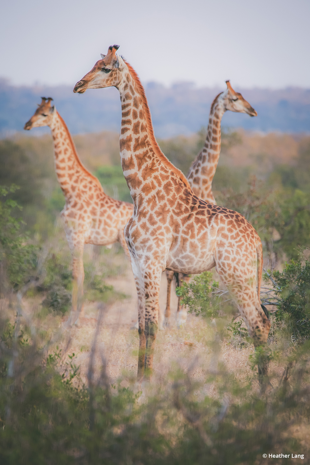 """Today's Photo Of The Day is """"African Guard Tower"""" by Heather Lang. Location: Kruger National Park, South Africa."""