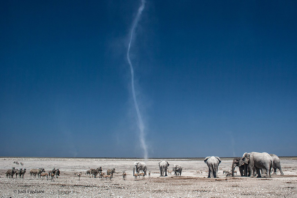 "Today's Photo Of The Day is ""Twister"" by Jodi Frediani. Location: Etosha National Park, Namibia."