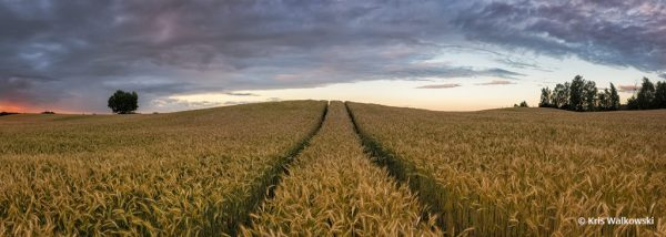 "Today's Photo Of The Day is ""Masurian Field"" by Kris Walkowski. Location: Masuria, Poland."