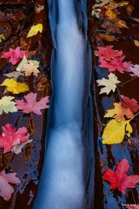 "Today's Photo Of The Day is ""Subway Crack Autumn"" by Kyle Jones. Location: Zion National Park, Utah."