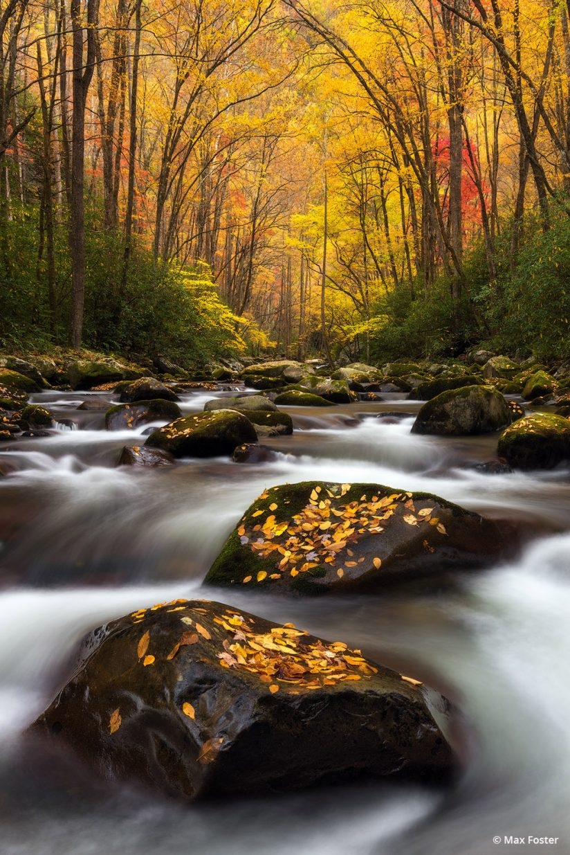 "Today's Photo Of The Day is ""Autumn Splendor"" by Max Foster. Location: Great Smoky Mountain National Park, North Carolina."