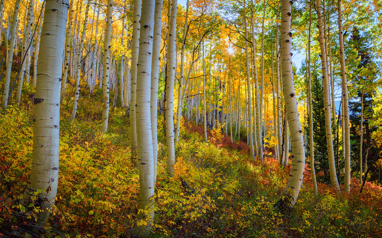 "Today's Photo Of The Day is ""Hope That Shines"" by Wendy Gedack. Location: Ohio Pass near Crested Butte, Colorado."