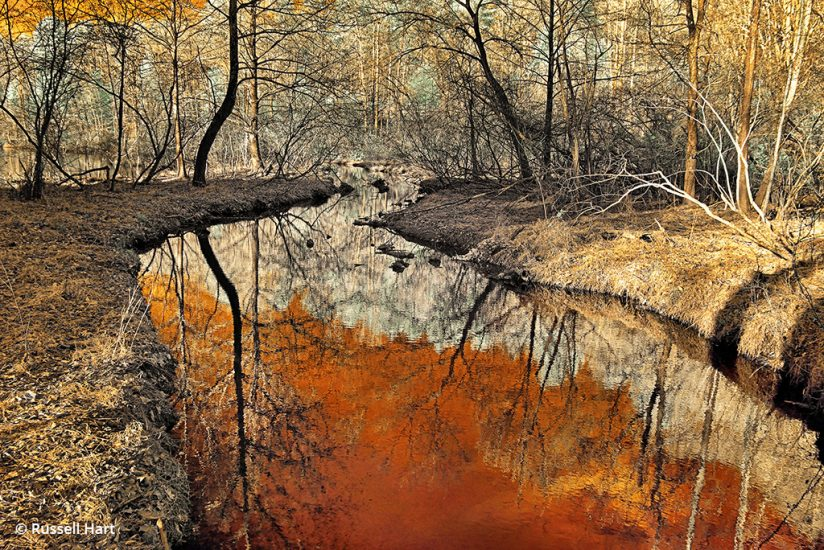Fairy Stone State Park, Virginia captured with color infrared photography