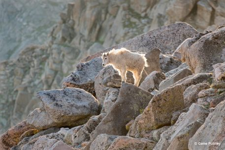 """Today's Photo Of The Day is """"Solitude"""" by Gene Putney. Location: Mount Evans, Colorado."""