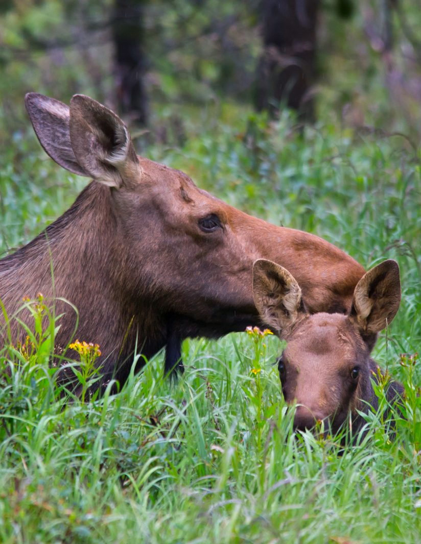 Moose Photography Tours