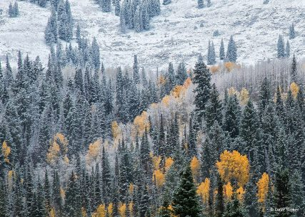 "Today's Photo Of The Day is ""First Snow"" by Dave Stoker. Wasatch Mountains, Utah."
