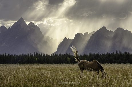 "Today's Photo Of The Day is ""Horse Light"" By Beth Holmes. Location: Grand Teton National Park, Wyoming."