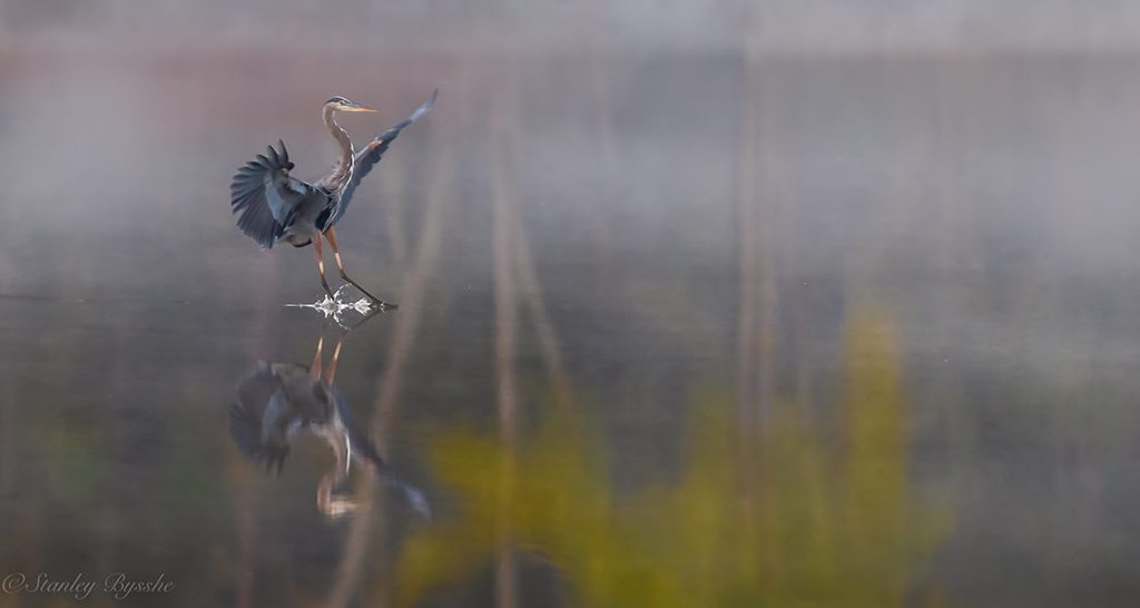 "Today's Photo Of The Day is ""Foggy Fall Landing"" by Stan Bysshe. Location: Virginia."