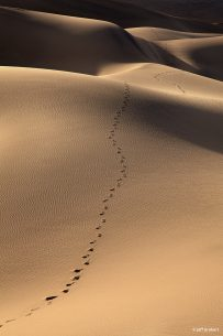 "Today's Photo Of The Day is ""Footsteps"" by Jeff Grabert. Location: Death Valley National Park, California."