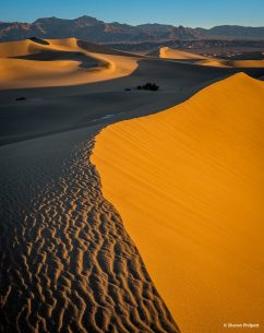 "Today's Photo Of The Day is ""Glowing Dunes"" by Sharon Philpott. Location: Death Valley National Park, California."
