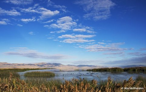Photo of Bear River Migratory Bird Refuge