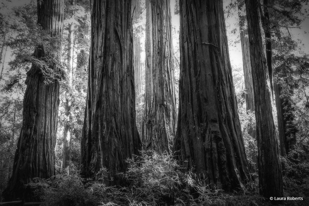 """Today's Photo Of The Day is """"Ethereal Giants"""" by Laura Roberts."""