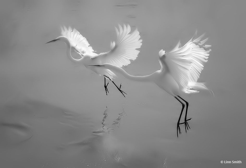 """Today's Photo Of The Day is """"Fairy Dancers"""" by Linn Smith"""
