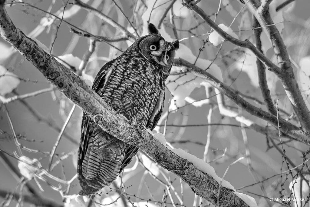 """Today's Photo Of The Day is """"Long Eared Winter Glow Black and White"""" by Michael Morse. Location: Market Lake, Idaho."""